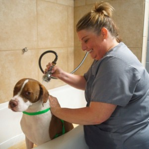 Pet Bath