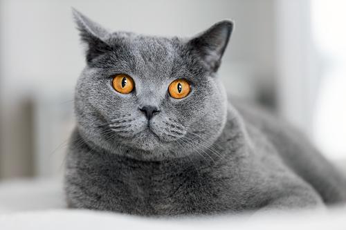 Veterinary ophthalmology | Whitworth Animal Clinic | Huntsville, AL