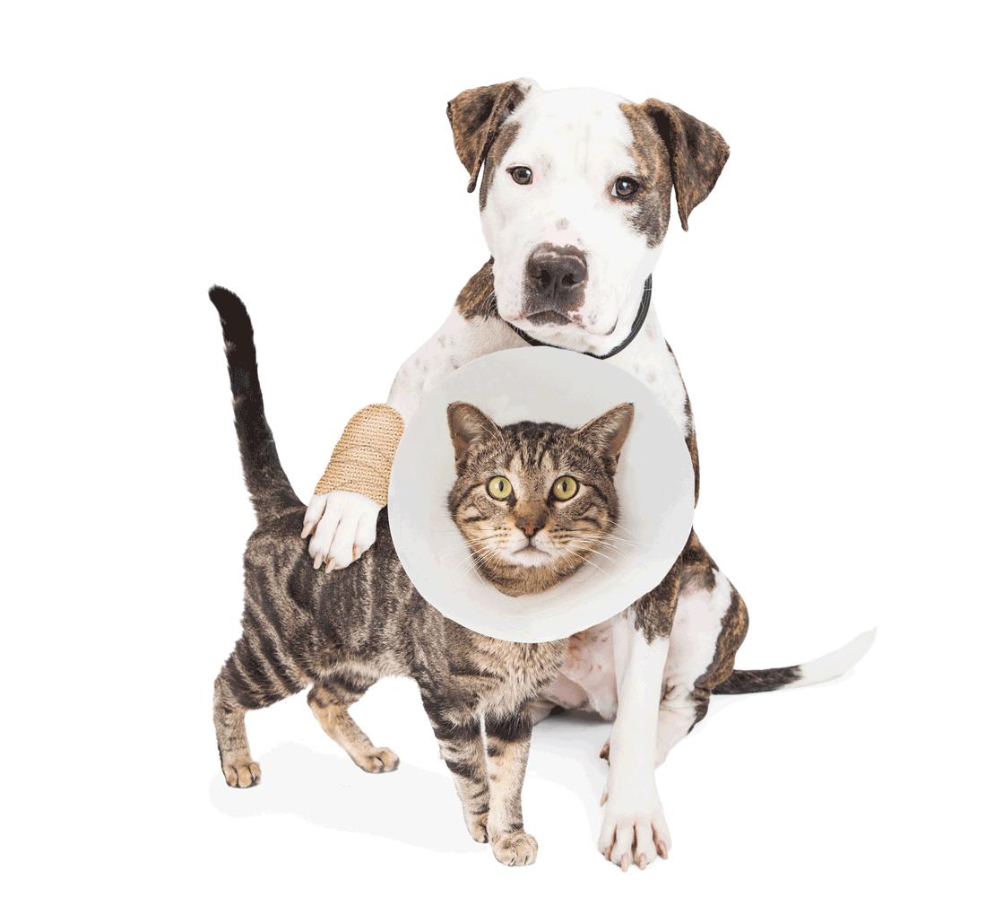 Cat and dog Pet Wellness
