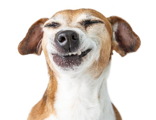 Pet Dental Health Month: Professional Cleanings