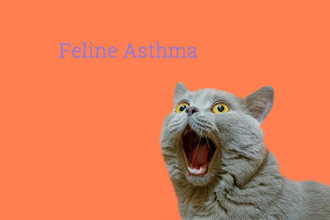 Feline Asthma Symptoms