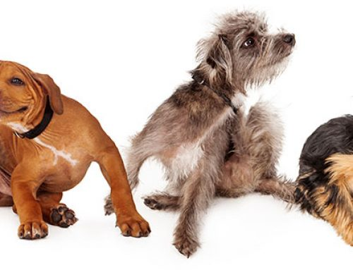 Does Your Dog Have Fleas? How Fleas and Worms Work Hand in Hand