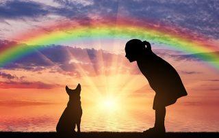 Remember a pet