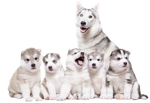 Animal Reproduction | Whitworth Animal Clinic | Huntsville, AL