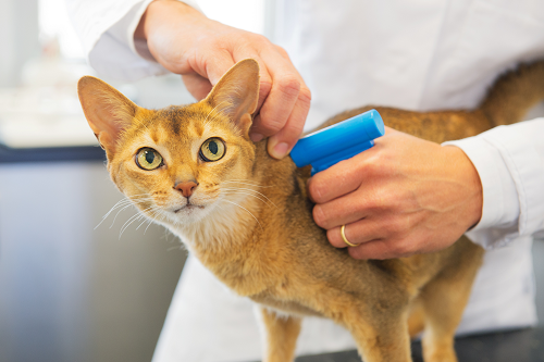 Microchipping Your Pet Is Safe and Easy
