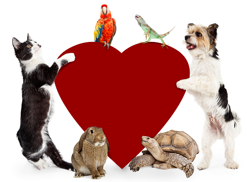 Veterinary Cardiology for Pet Hearty Health