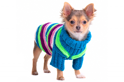 Should your dog where a coat in the winter?