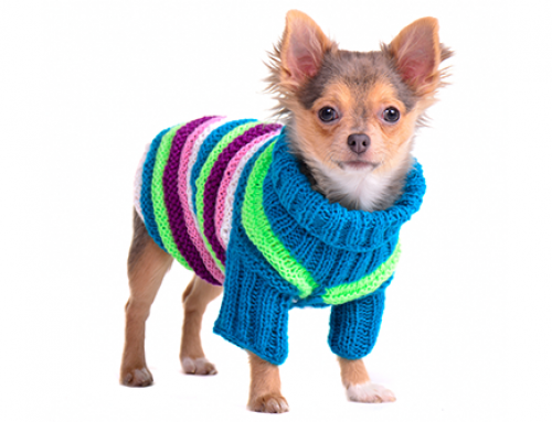 Should Your Dog Wear a Coat in the Winter?