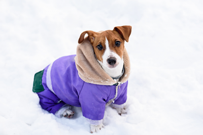 dog coat | photo of a dog wearing a coat in the snow