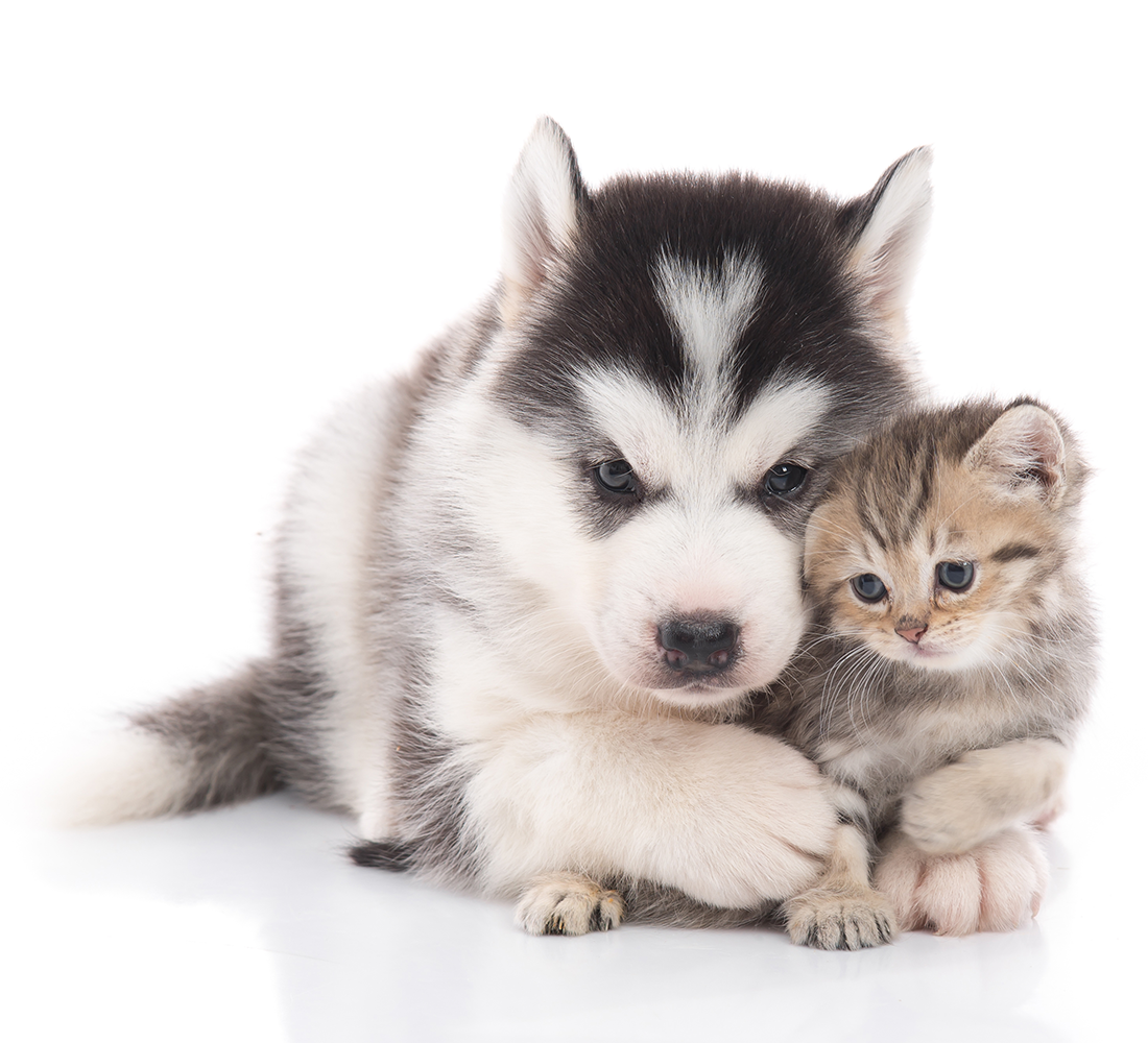 spay and neuter | photo of cute puppy and kitten