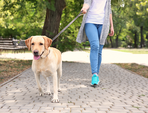 The Comprehensive Benefits of Walking Your Dog