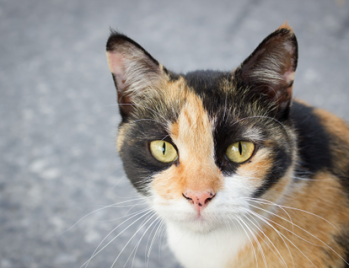 What is Considered a Feral Cat?