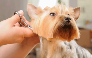 Summer Pet Grooming | Whitworth Pet Clinic