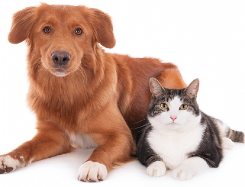 Could Your Pet Have Pancreatitis?