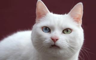 Feline Oral Care | Dr. Whitworth