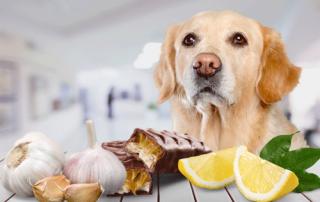 Whitworth Pet Vet | Diet Guidelines