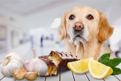 Whitworth Pet Vet | Diet Guidelines