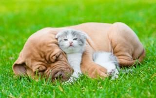 Whitworth Pet Vet | Dr. Charles Whitworth