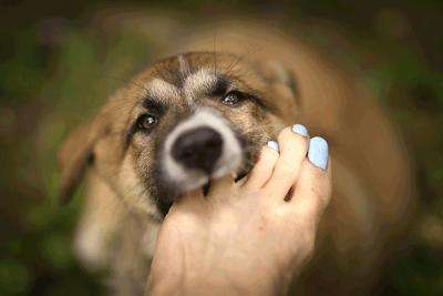 dog nail biter