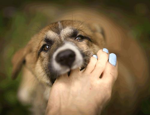 Dog Nail Biting