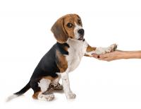 Dog paw preference