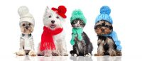 Heartworm prevention in the winter