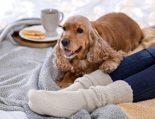 Cold Weather Care for Your Pets