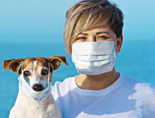Can Pets Contract Coronavirus