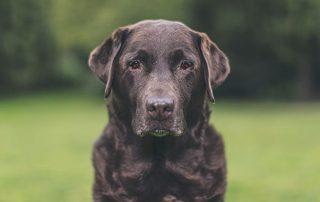 Signs your pet has arthritis