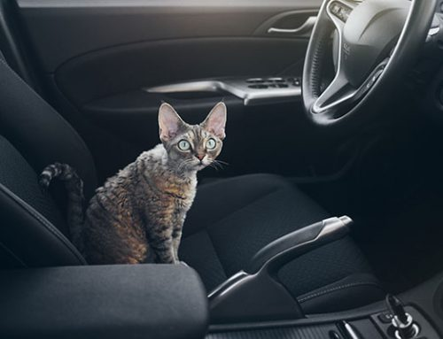 Traveling With Your Pet – Road Trip!