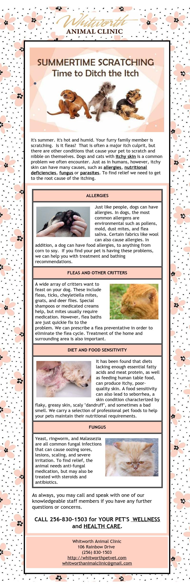 pet dermatology, pet allergies
