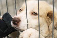 adopt a pet month