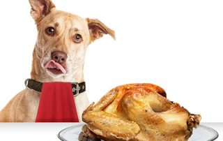 Foods dogs should avoid