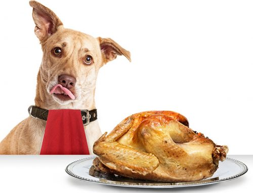 Thanksgiving Foods Your Dog Should Avoid