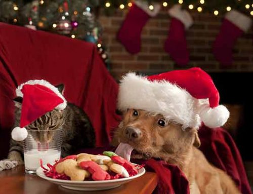 Make the Holiday Season Safe For Your Pet