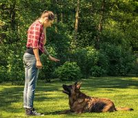 Training yourdog